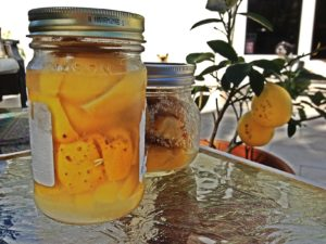 My preserved Meyer Lemons in front of my Meyer Lemon tree. Dogs in the background not included! :)