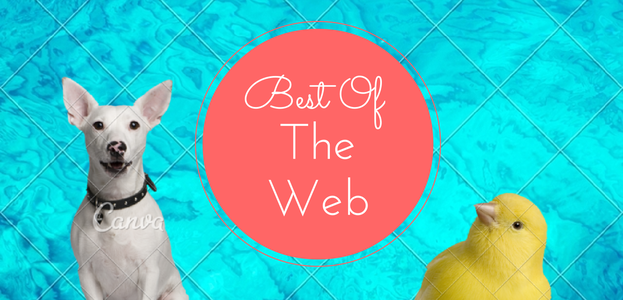 Best of the Web: Canva, Flip Flops, How to Test Your Propane Tank, and Paleo Drop Biscuits